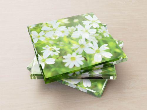 Greater Stitchwort - Glass Coasters